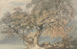 Turner - A Great Tree, c.1796