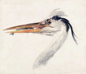Turner - Heron with a fish
