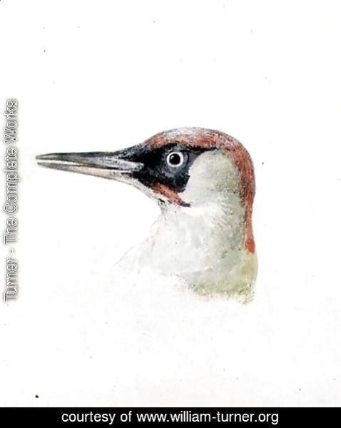 Turner - Woodpecker, from The Farnley Book of Birds, c.1816