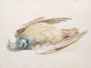 Turner - Pigeon, from The Farnley Book of Birds, c.1816