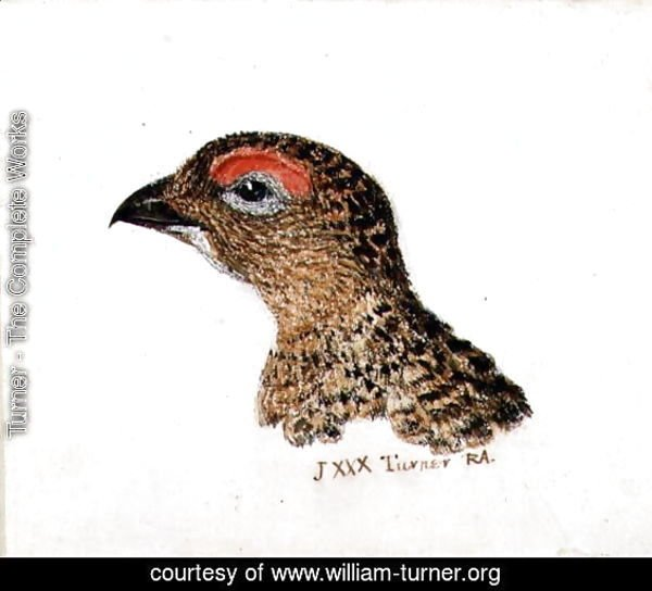 Head of Grouse, from The Farnley Book of Birds, c.1816