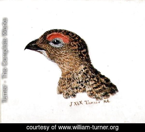 Turner - Head of Grouse, from The Farnley Book of Birds, c.1816
