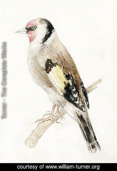 Turner - Goldfinch, from The Farnley Book of Birds, c.1816