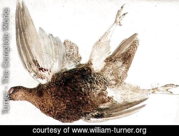 Turner - Grouse, from The Farnely Book of Birds, c.1816