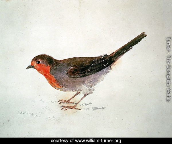 Robin, from The Farnley Book of Birds, c.1816