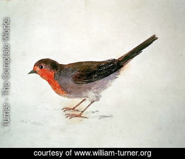Turner - Robin, from The Farnley Book of Birds, c.1816