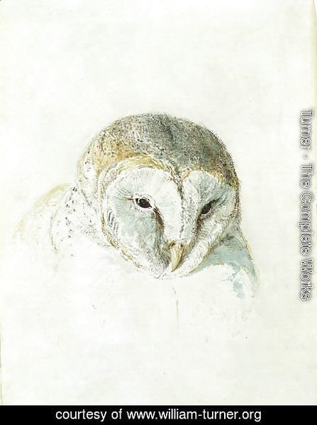 White Barn Owl, from The Farnley Book of Birds, c.1816