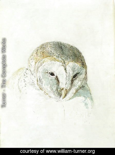Turner - White Barn Owl, from The Farnley Book of Birds, c.1816