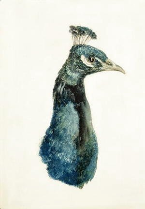 Turner - Peacock, from The Farnley Book of Birds, c.1816