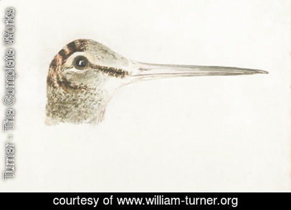 Turner - Woodcock, from The Farnley Book of Birds, c.1816