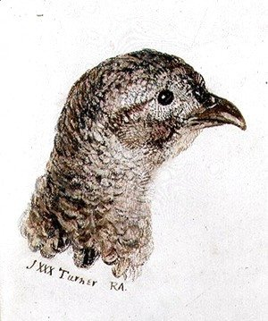 Turner - Hen Pheasant, from The Farnley Book of Birds, c.1816