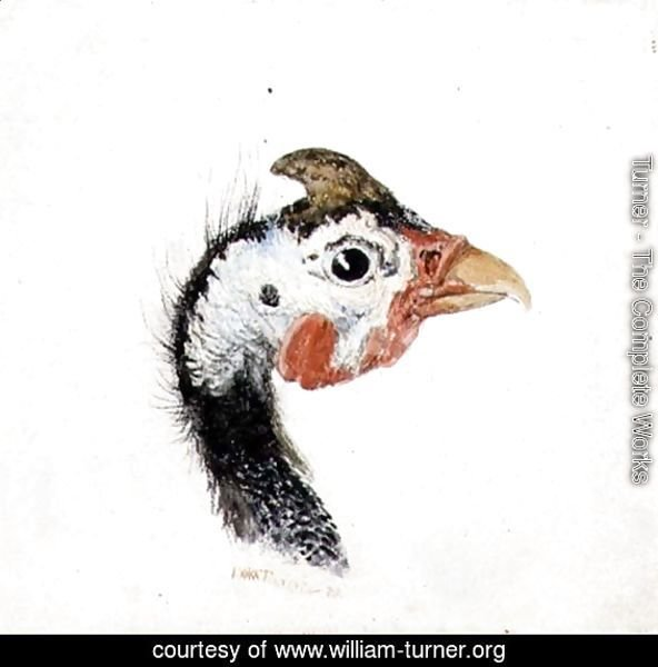 Guinea Fowl, from The Farnley Book of Birds, c.1816