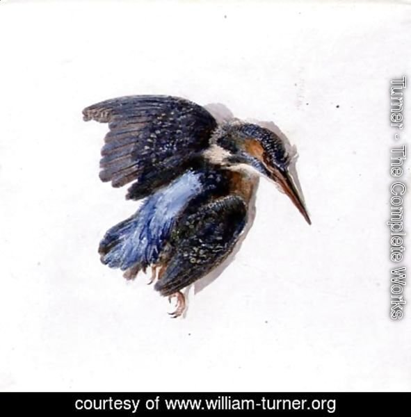 Turner - Kingfisher, from The Farnley Book of Birds, c.1816