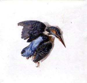 Kingfisher, from The Farnley Book of Birds, c.1816