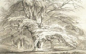 Turner - Beech Trees at Cassiobury Park, Hertfordshire