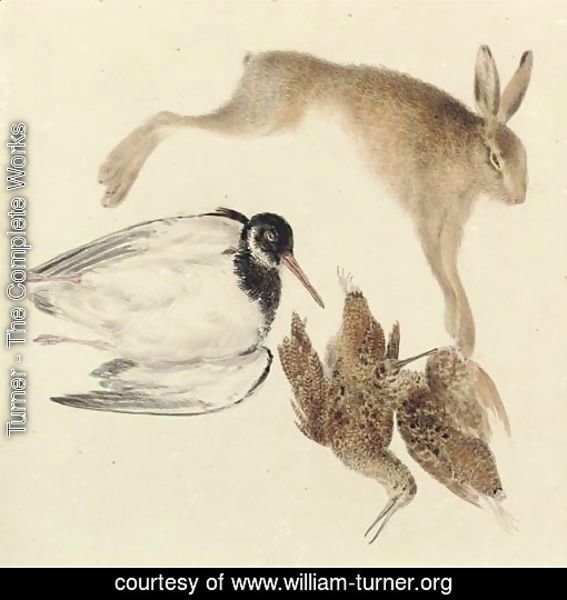 Study of dead game woodcock, oyster catcher and hare