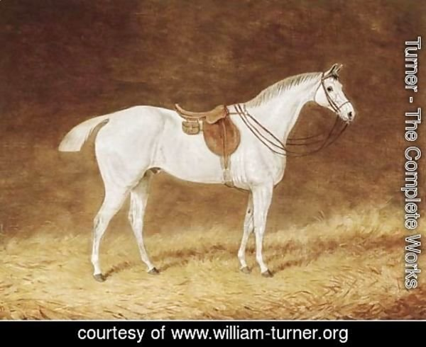 Turner - A saddled grey hunter in a stable