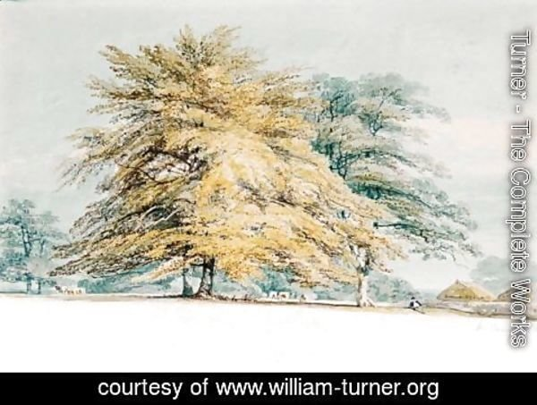 Turner - A Beech Copse Near Haystacks
